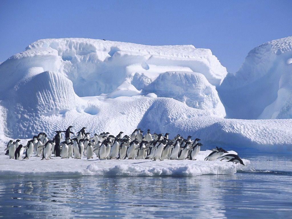 Cual Es Mas Frio El Polo Sur O El Polo Norte Polo Norte Antartida Paisajes