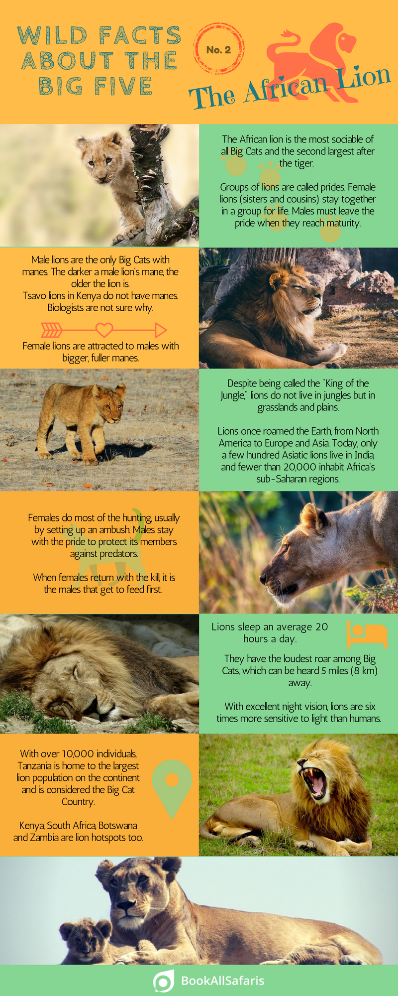 Wild Facts About the Big Five No. 2 the African Lion