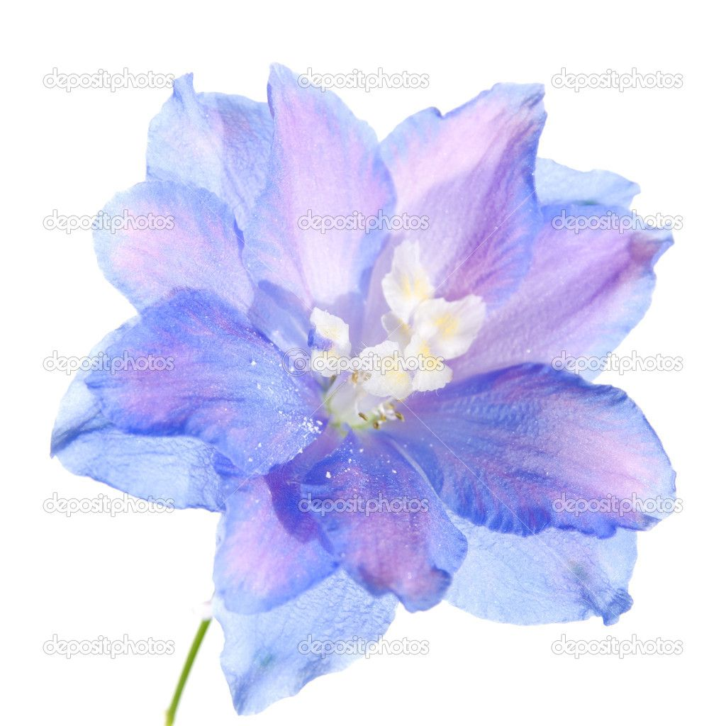 delphinium flower but in black and grey for my quot flower
