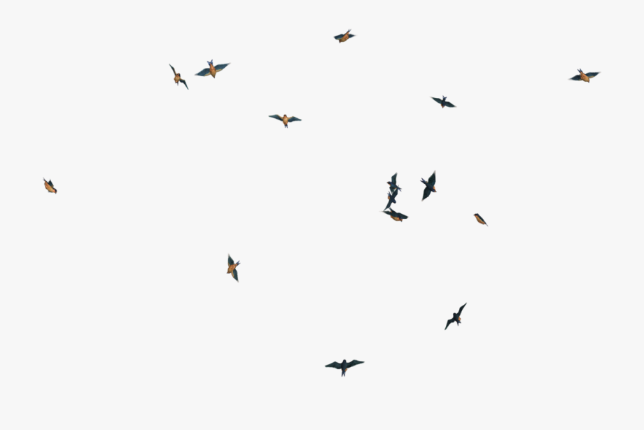 Bird Flock Png Birds Flying Gif Png Free Unlimited Download On Clipartwiki To Search And Explore More Related Png Clipa Fly Gif Birds Flying Flock Of Birds
