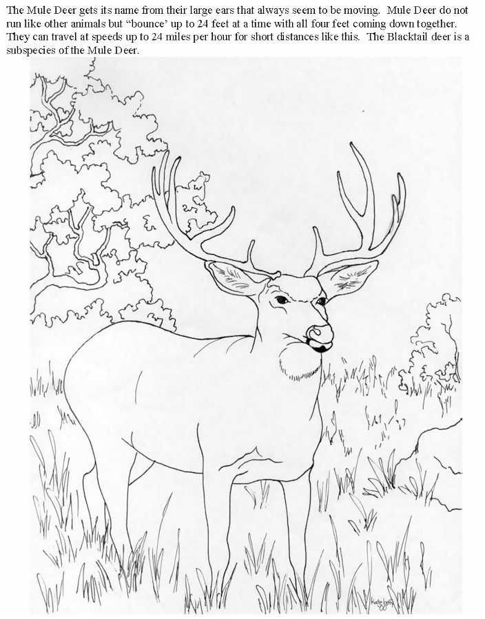 Benefit4kids Coloring Book Deer Coloring Pages Animal Coloring Books Horse Coloring Pages