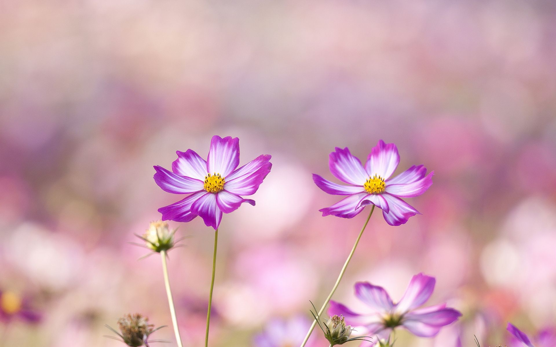 Summer Flowers Wallpaper Hd Desktop Widescreen For Mobile Tumblr