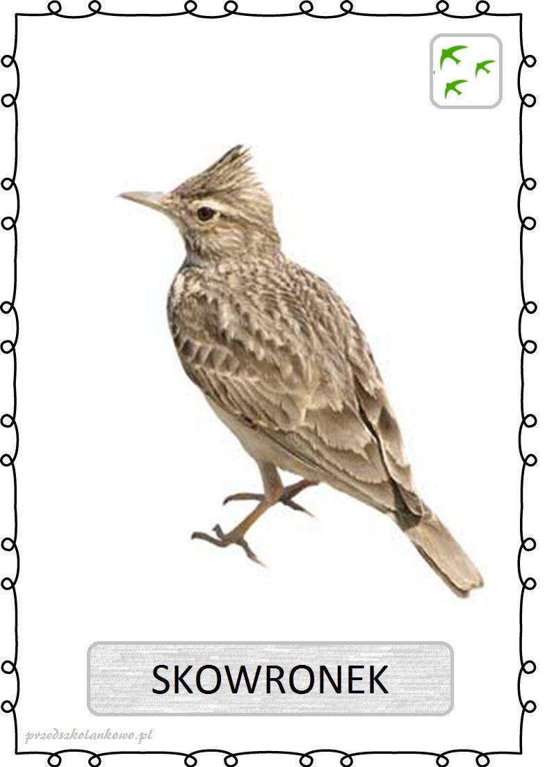 Skovranok Animals Montessori Birds