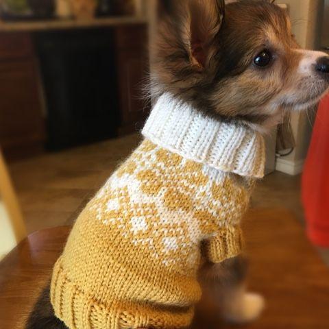 ami-log from Oklahoma: 犬用fairisleセーター | Dog HandMade idea ...