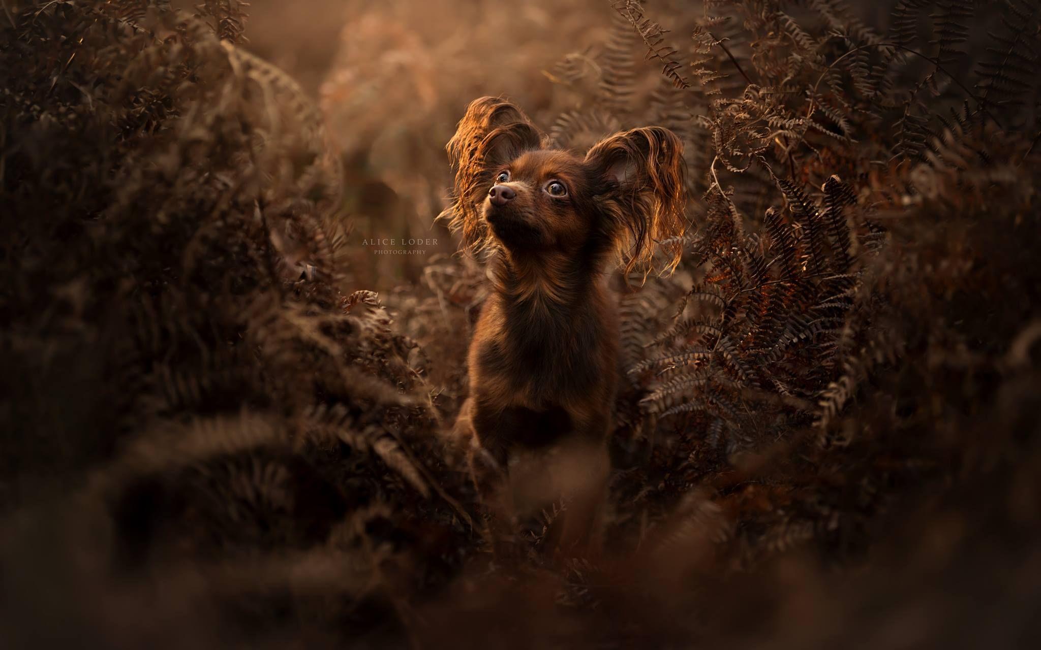 Pin by Zůza Vodičková on Cats & Dogs Animal photo, Best