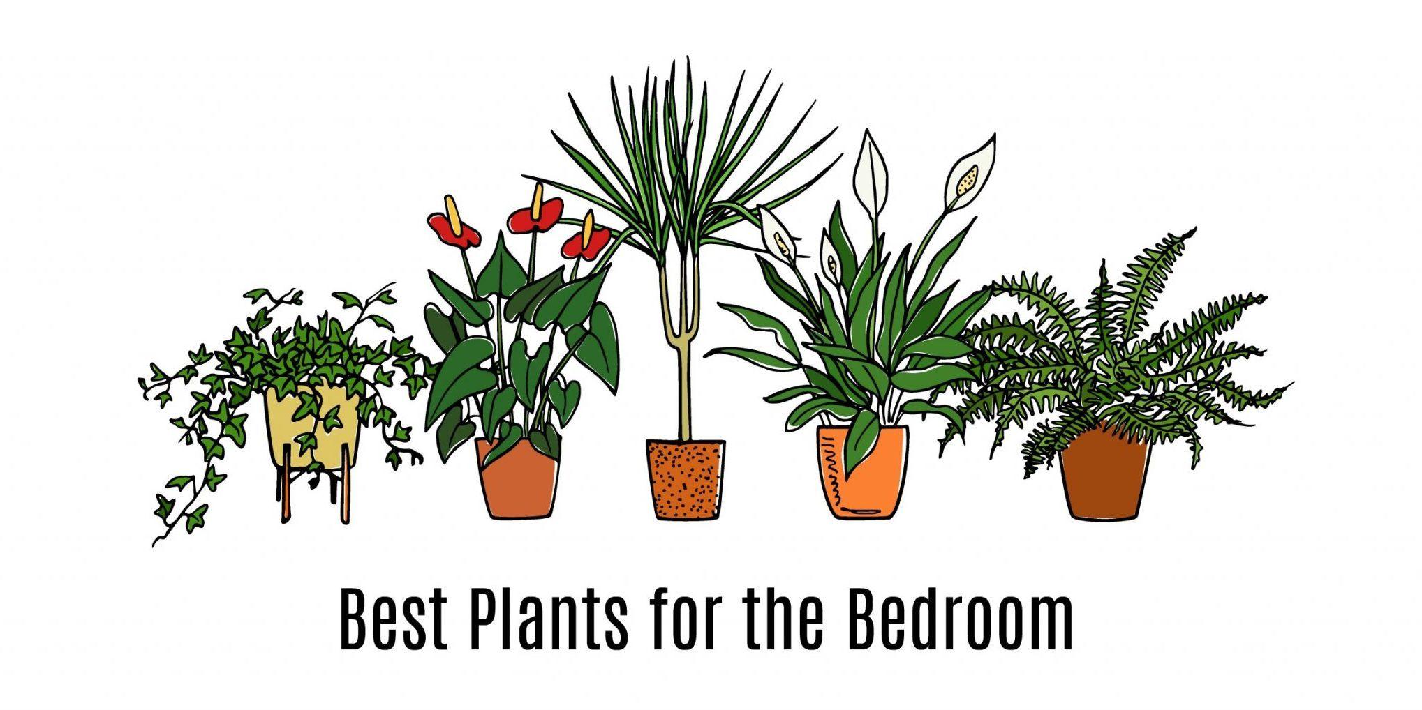 Best Bedroom Plants For Better Sleep Bedroom Plants Best Plants For Bedroom Plants