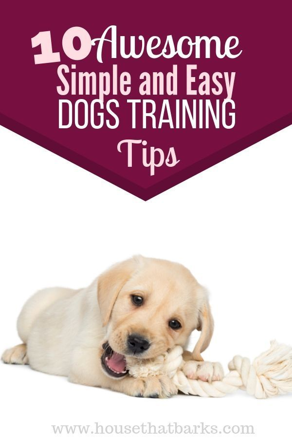 Helping Your Puppy Sleep Through The Night Puppy Sleeping Dog Training Dog Training Tips Training Your Puppy