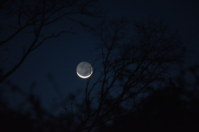 The moon through the trees. #moon #trees