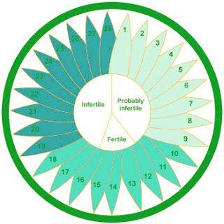 Beitypedia بيتي بيديا حساب أيام الدورة وتحديد فترة التبويض Menstrual Cycle Menstrual Menstrual Period