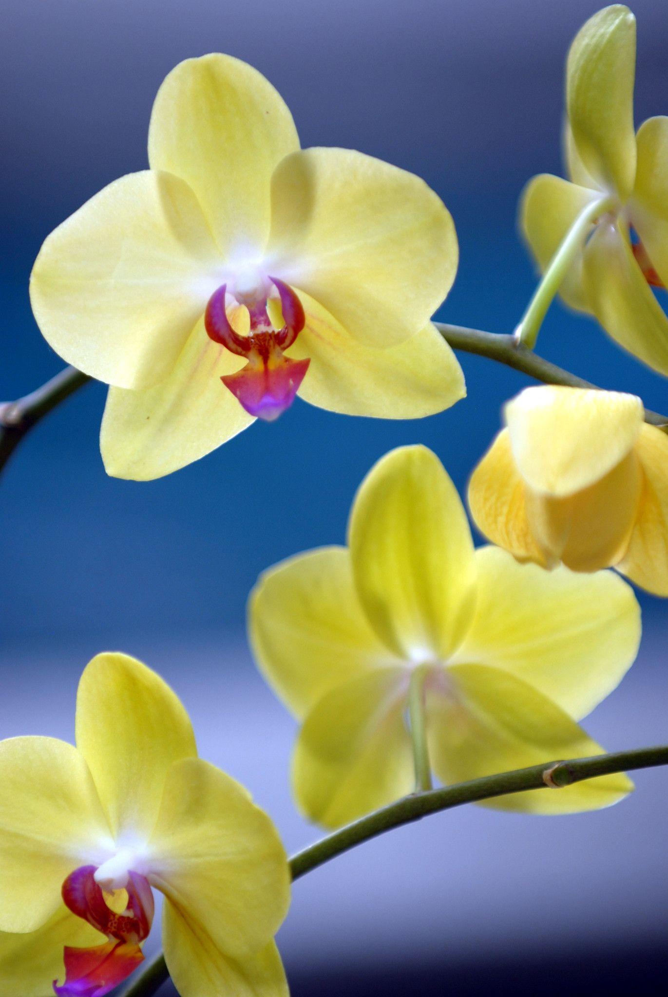 Orchids Amazing Flowers Flower Wallpaper Orchids Fantastic orchid flower wallpaper