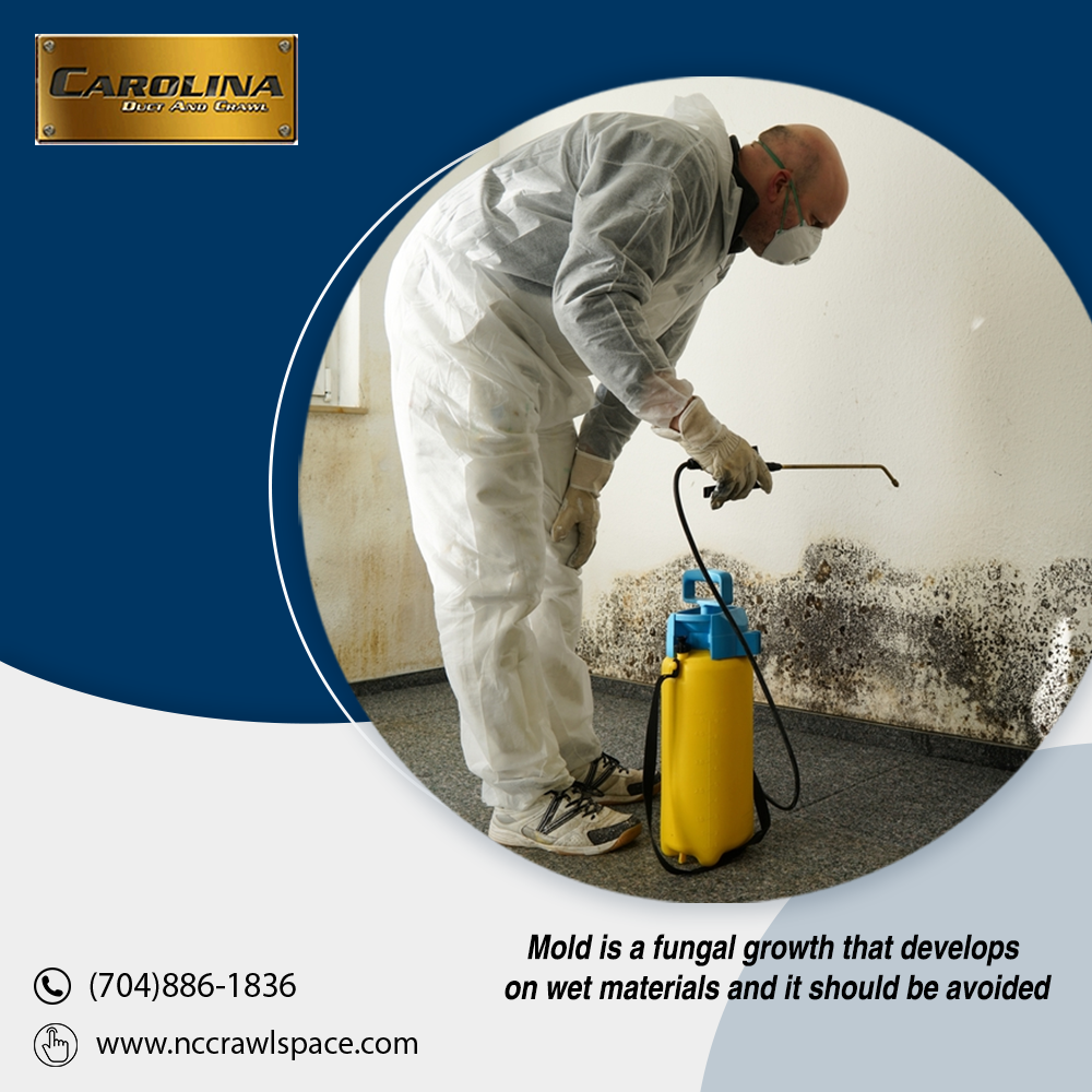To avoid the growth of mold in your household, try our