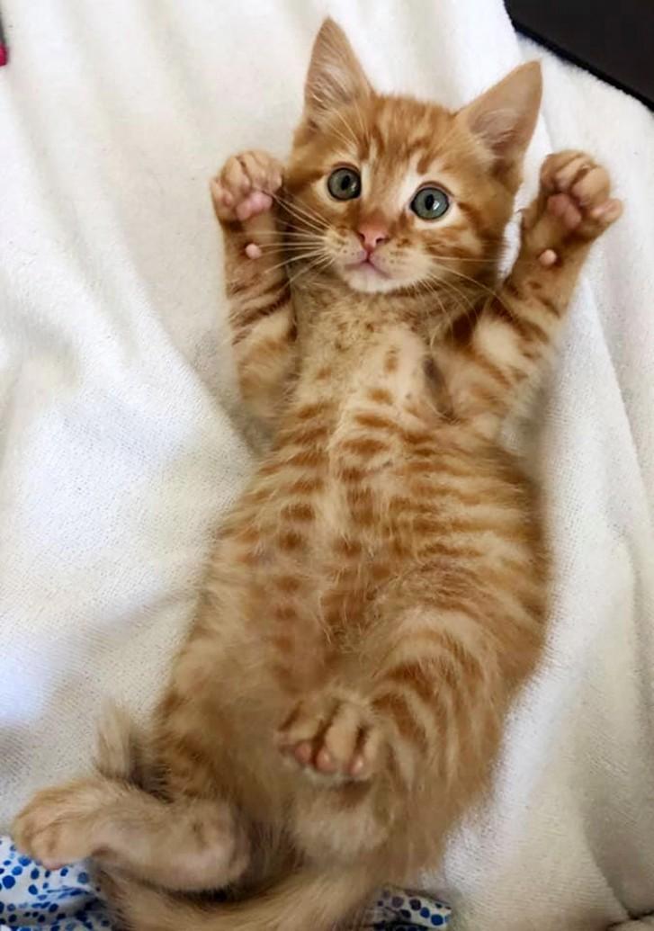 Adopt A Pet Pet Adoption Cat Adoption Adoption