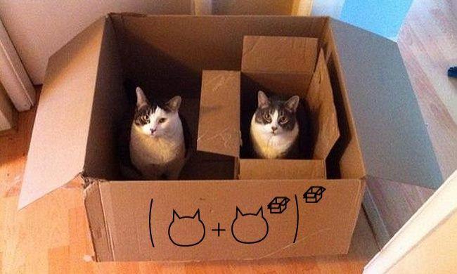 Catamatics!