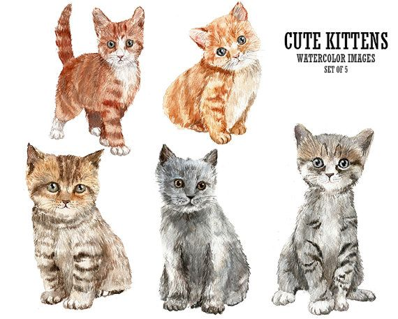 286c11572c2f4 Pin by Jules Woodard on Watercolor animals ... baby | Cat clipart ...