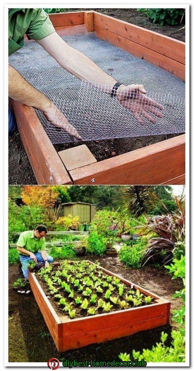 Legumes A Mettre Dans Le Jardin diy home decor | jardin de légumes, design de jardin potager