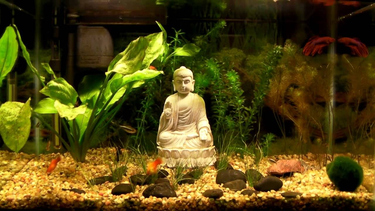 Stocking A 10 Gallon Tank 16 Perfect Fish For A 10 Gallon Tank Fresh Water Fish Tank Freshwater Aquarium Fish Beta Fish Tank