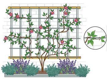 Extremely Clematis richtig pflanzen | Spalier, Bepflanzung und Pflanzen QL06