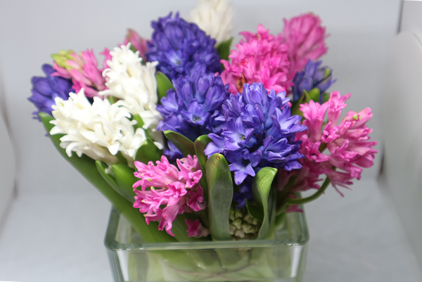 how to grow Hyacinth in a glass vase Planting flowers