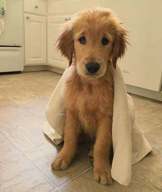 Just After A Shower Dogs