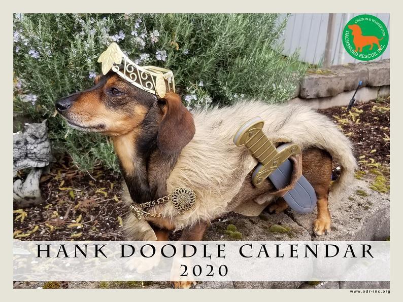 Oregon Dachshund Rescue Spokesdog Hank 2020 Calendar Image 0