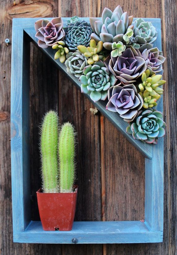 Shelf vertical planter succulent garden 15 x 10 made to for Terrario vertical