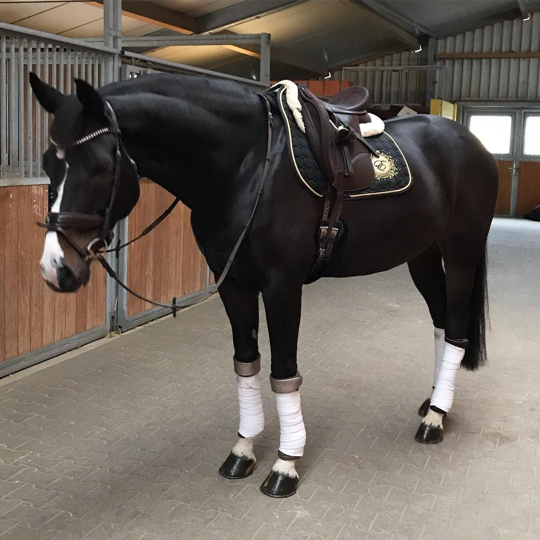 Beautiful!! Let's saddle up! 🏇🏼🏇🏼❣❣