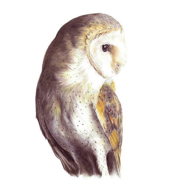 Barn owl, owl print, owls illustration, owl art for kids ...