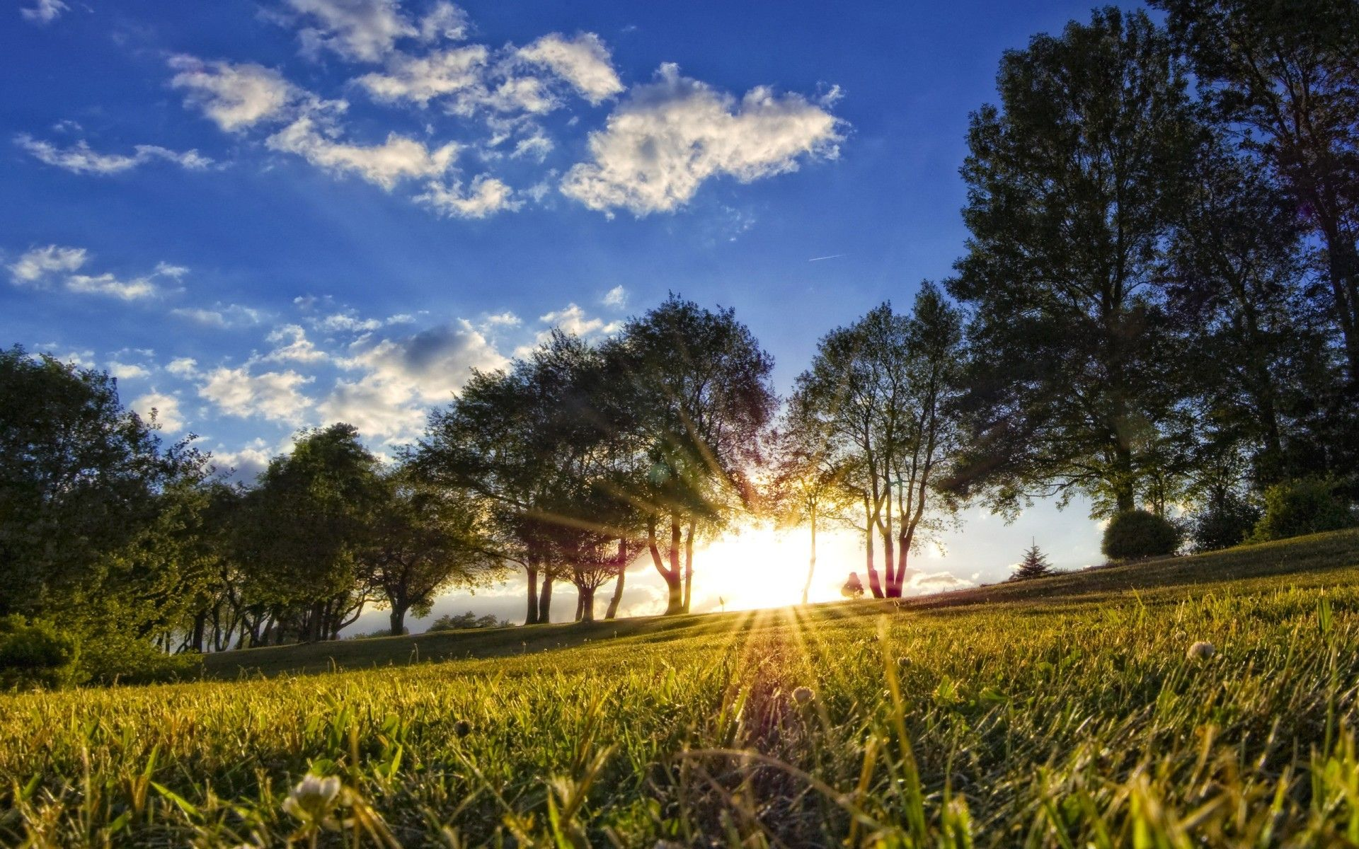Summer Nature Pictures Widescreen 2 Hd Wallpapers Nature