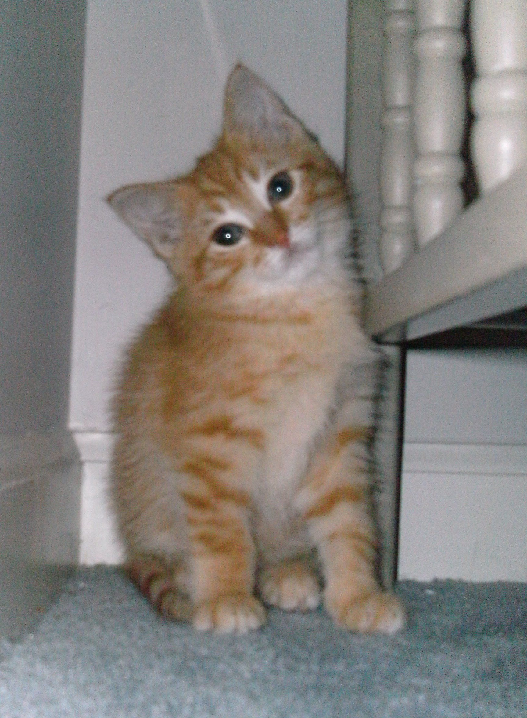 ADOPTED 5/19/12Noah here. I'm available for adoption too