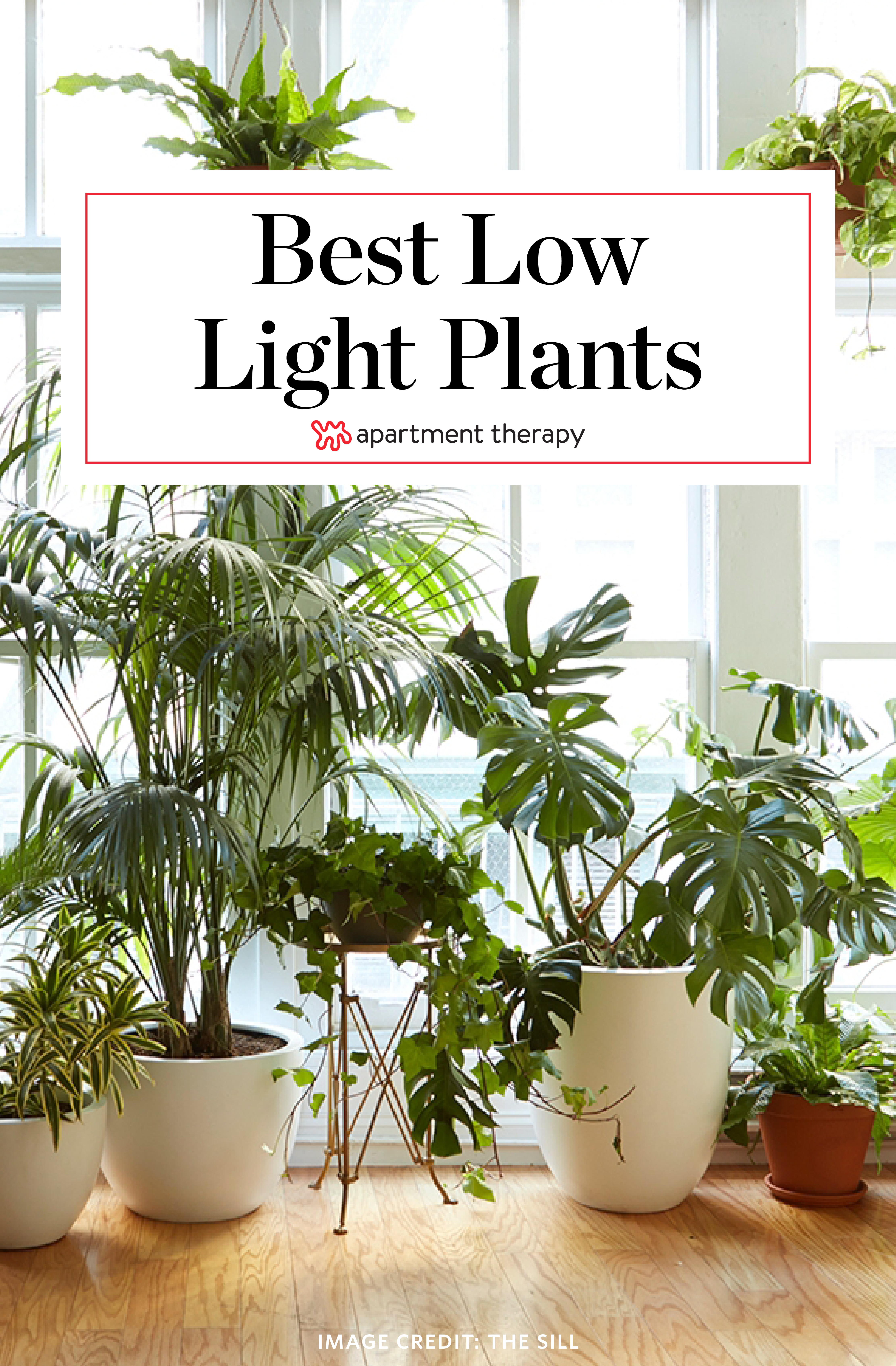 8 Houseplants That Can Survive Urban Apartments Low Light And Under Watering
