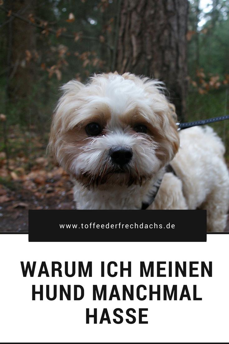 Schnauze Voll Vom Hund Hunde Frechdachs Frech