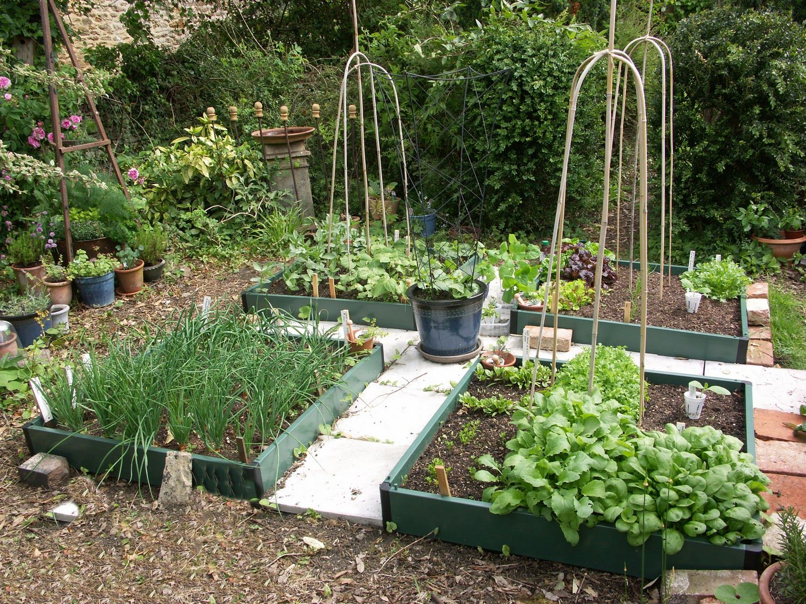 small potager garden design - Google Search | Gardens | Pinterest ...