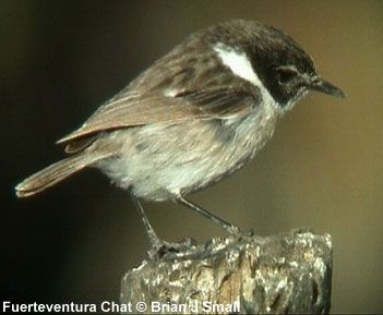 Odd Name For This Secretive Little Bird Only Found On This