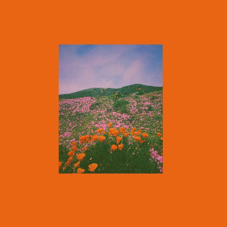 Pinterest Waveringthought Aesthetic Art Orange