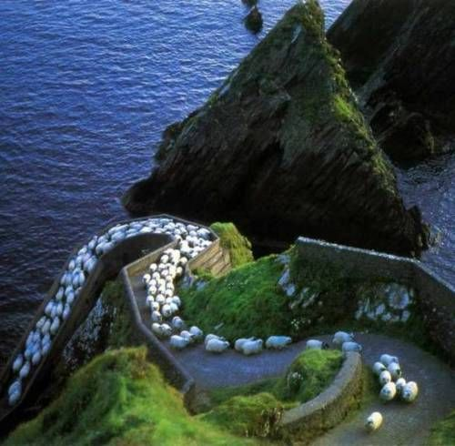 this so looks like the ring of kerry in ireland.. and this happened to us when we were there but not quite lol so many!