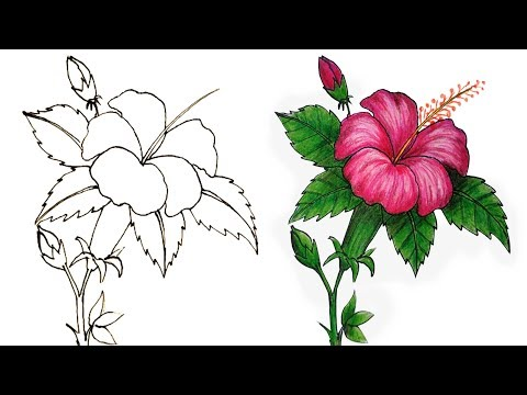 662 How To Draw A Hibiscus Flower Step By Step Very Easy Youtube In 2020 Hibiscus Flower Drawing Hibiscus Drawing Flower Drawing