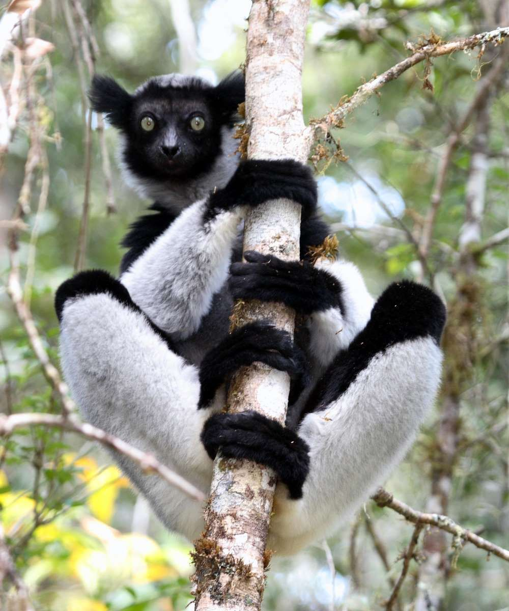 Image result for The Indri