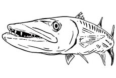 Barracuda Fish Coloring Pages Best Place To Color Fish Coloring Page Coloring Pages Fish