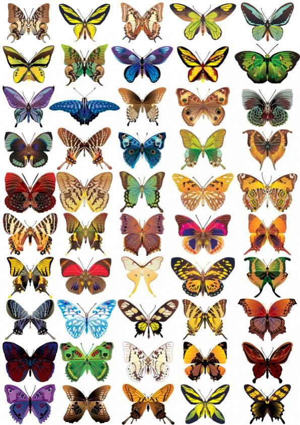 Big file vector butterfly | Mariposas | Pinterest | Anatomía animal ...