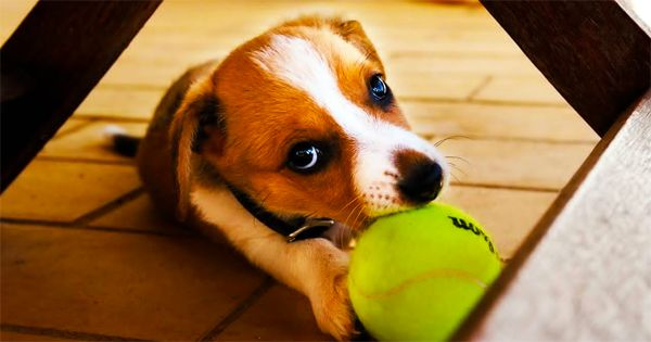 4 Brain Games To Play With Your Dog