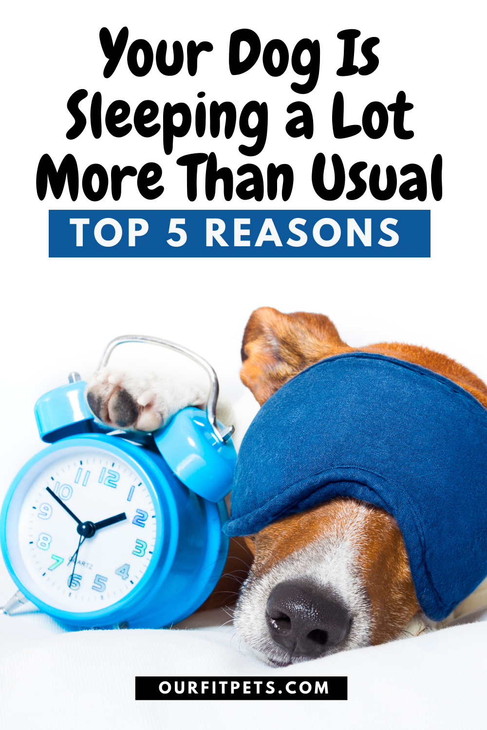 Your Dog Is Sleeping A Lot More Than Usual Top 5 Reasons Our Fit Pets Meds For Dogs Your Dog Cat Advice