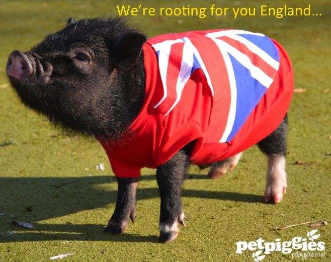 Come on England...we're rooting for you!