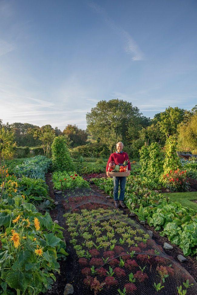 Online Course 2, Growing Success in 2020 | Dig gardens ...