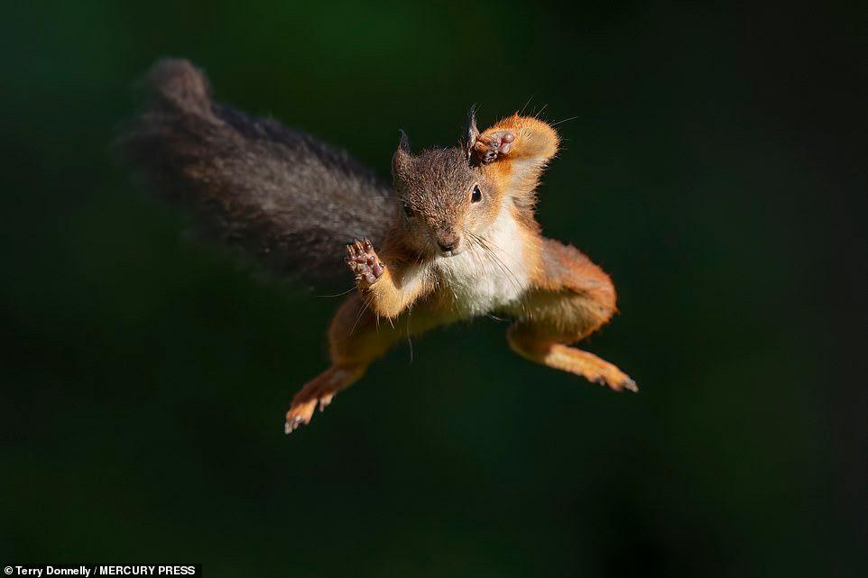 squirrel Google Search Red squirrel, Squirrel, Funny