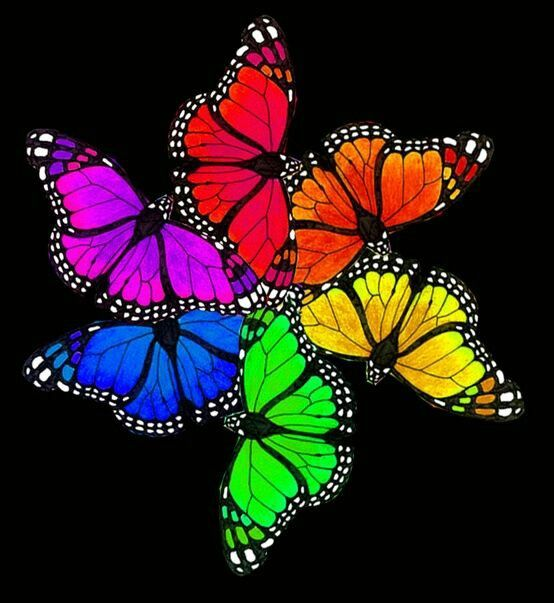 Rainbow Butterflies With Images Rainbow Butterflies