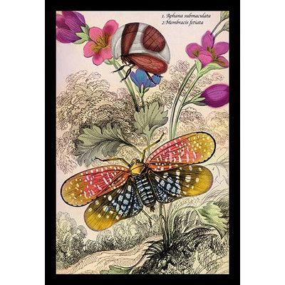 Buyenlarge 'Insects Aphana Submaculata and Membracis Fetiata' by James Duncan Graphic Art
