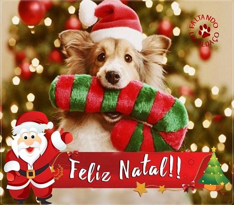 Natal Feliznatal Frases Fimdeano Pensamentos Perros