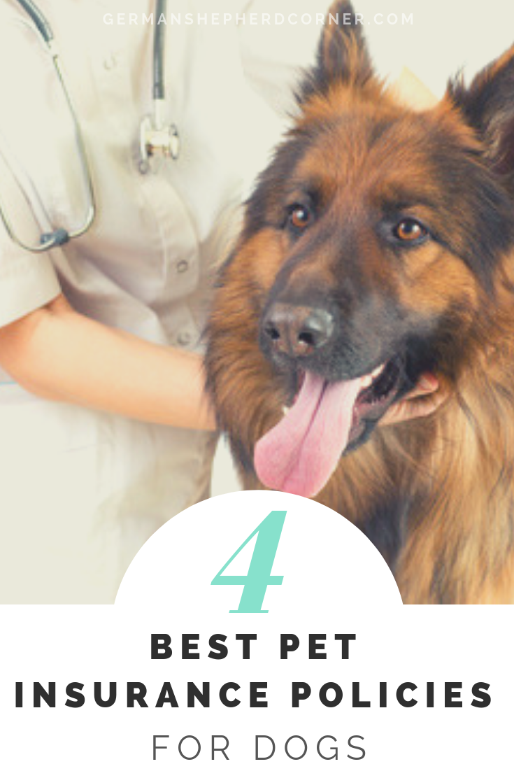 What Is The Best Pet Insurance To Get For Dogs With Images