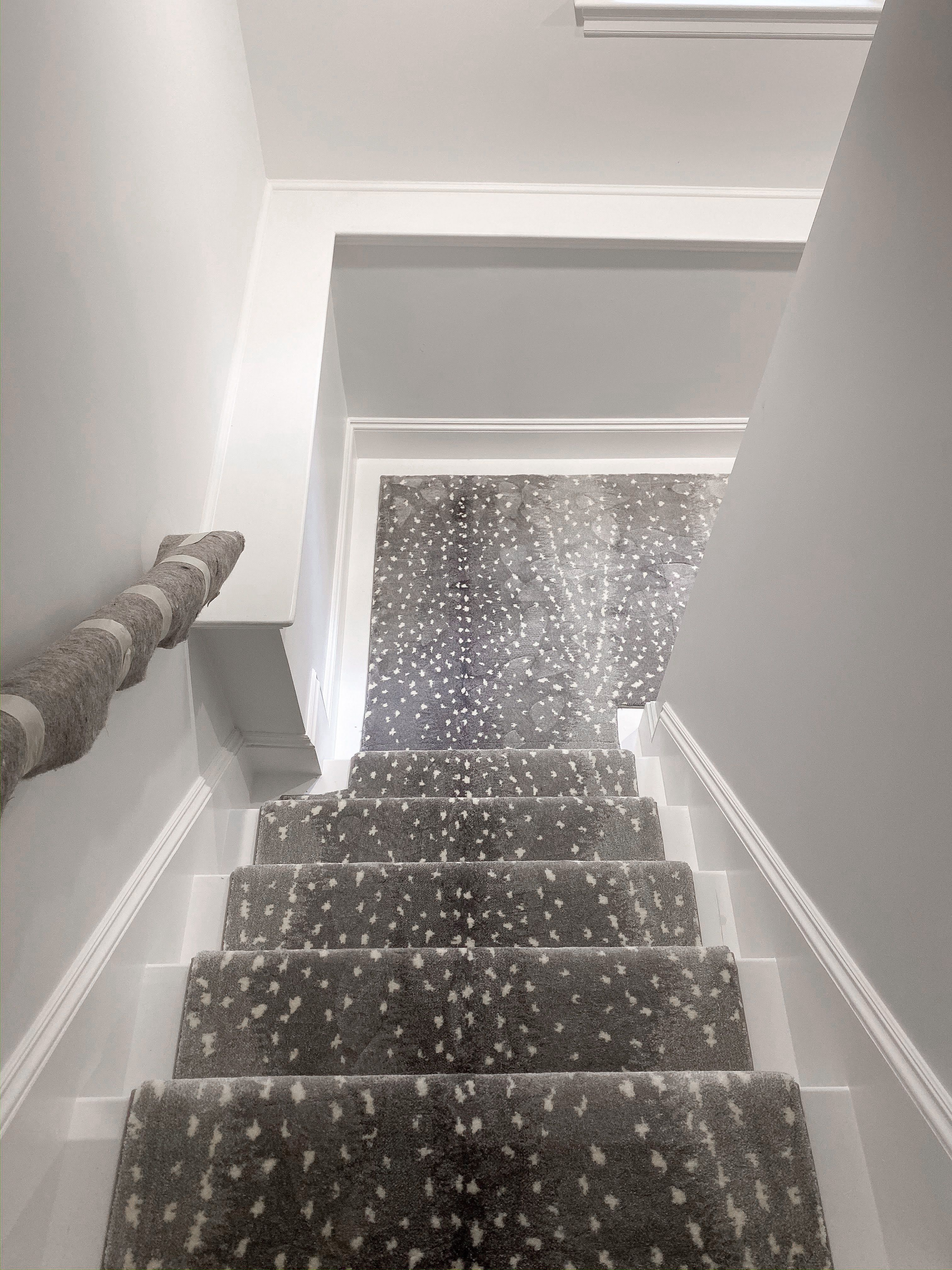Impala Carpet In 2020 Carpet Stairs Stair Runner Animal Print   Durable Carpet For Stairs   Straight   Trendy   Different Style Stair   Hallway   Stair Residential