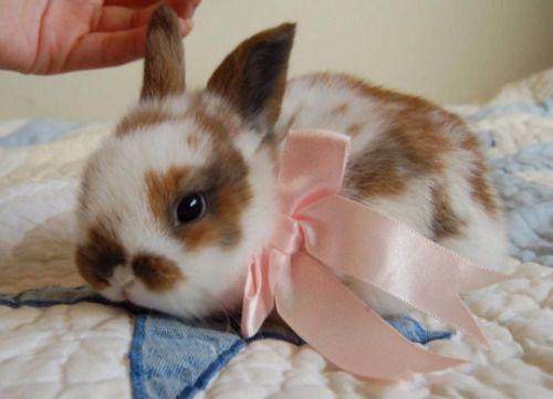 Cute Xoxo おしゃれまとめの人気アイデア Pinterest Sana うさぎ ウサギ 可愛い 動物